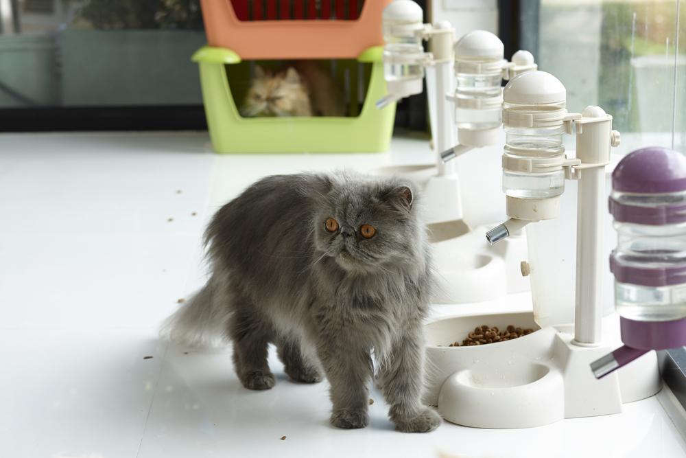 distributore automatico di cibo per gatti