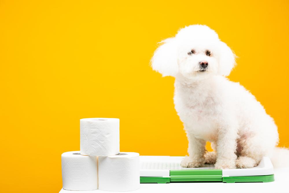 lettiera per cani