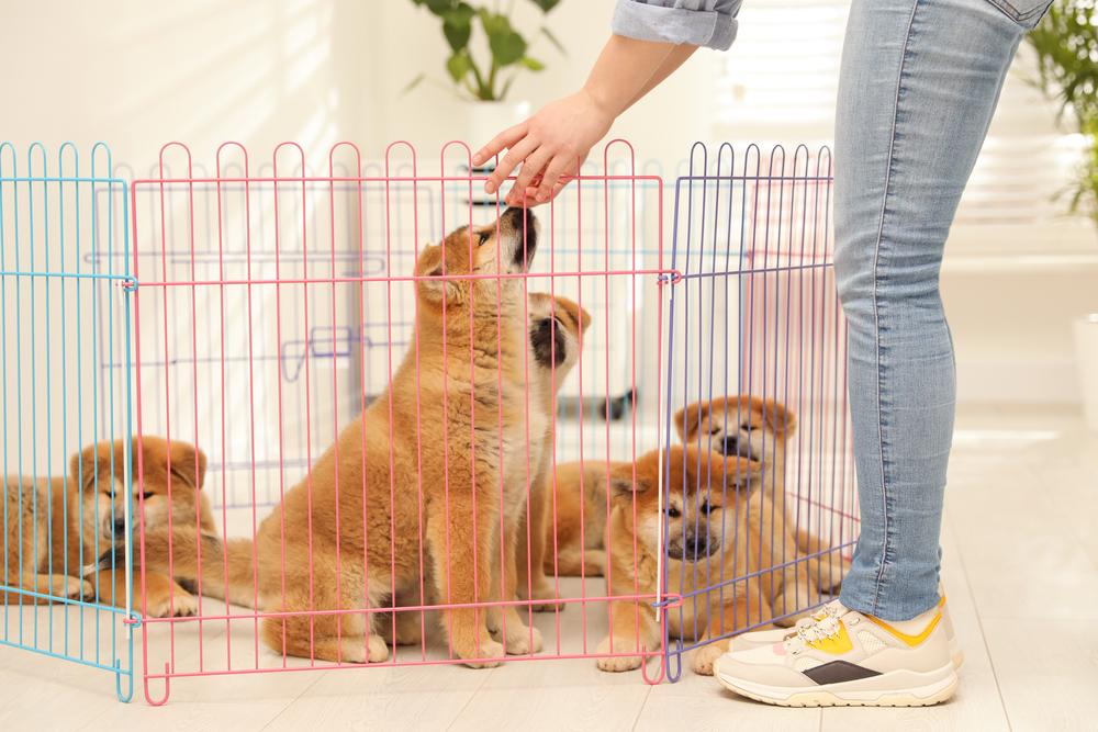 recinto per cani da interno